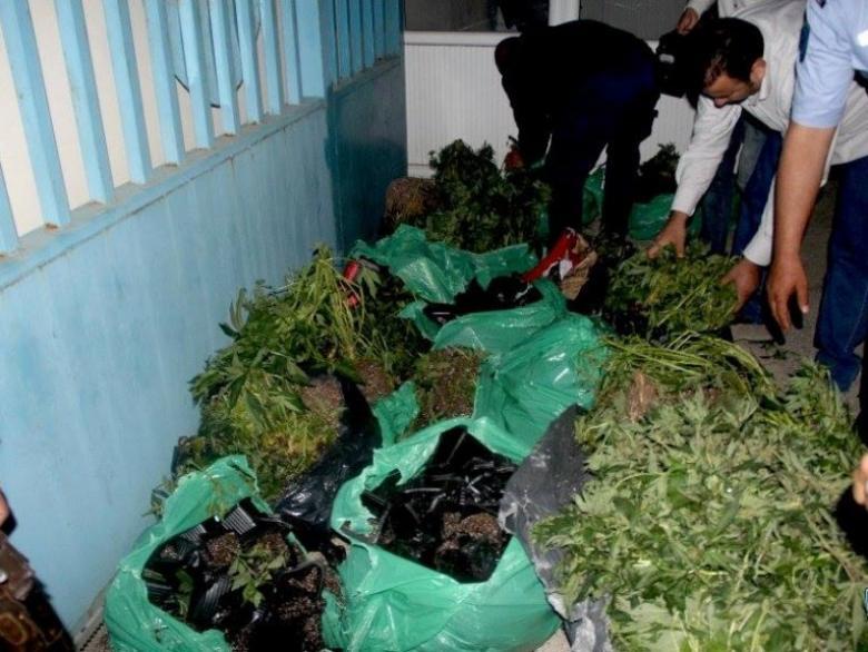 """الشرطة تضبط مئات أشتال """"المارجوانا"""" برام الله والبيرة"""