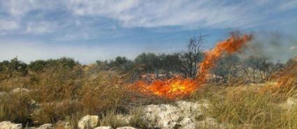 حريق يلتهم مئات أشجار الزيتون غرب جنين