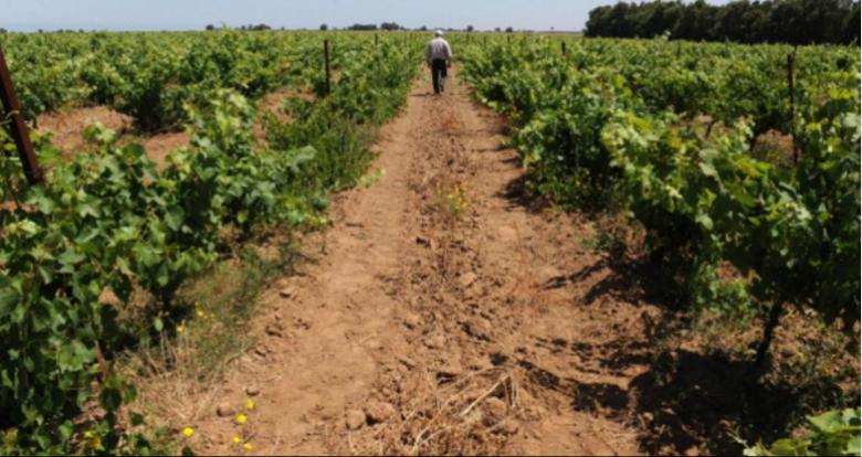 الآفات والزراعة.. خسائر بنصف تريليون دولار