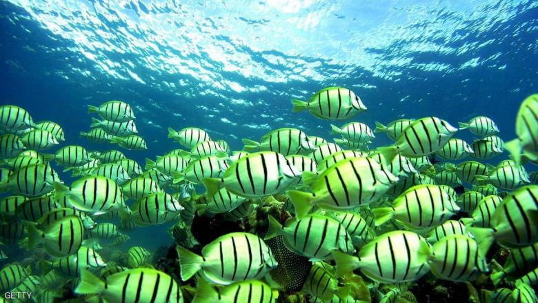 تعرف إلى سر قدرة أسماك على التحول من الأنوثة إلى الذكورة
