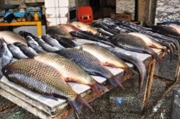 ضبط 40 كغم سمك غير صالح للاستهلاك برام الله