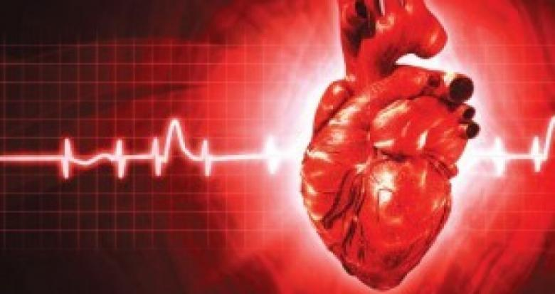 بروتين ينظم إيقاع عمل القلب والدماغ