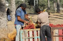 إغلاق معابر غزة يهدد موسم البلح بالضياع