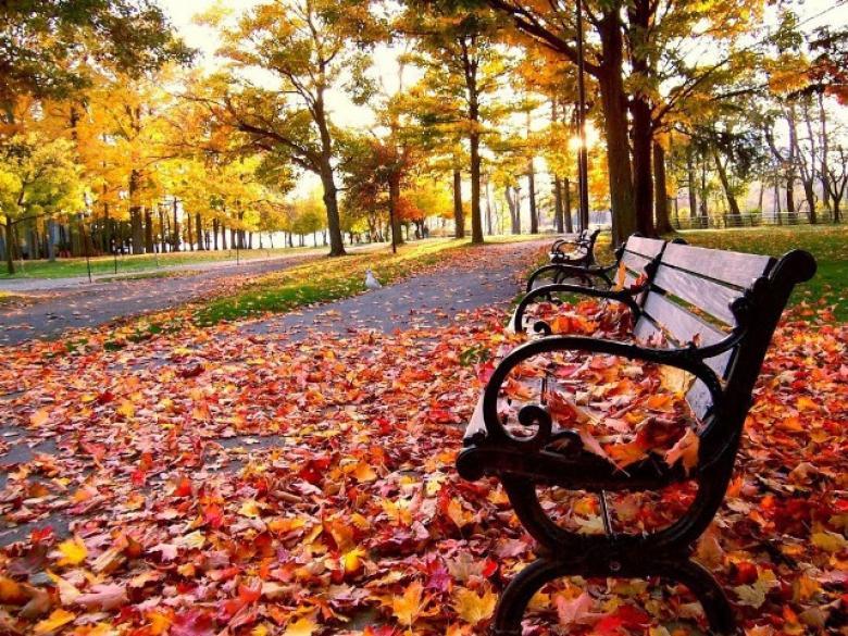 متى يبدأ فصل الخريف لهذا العام؟