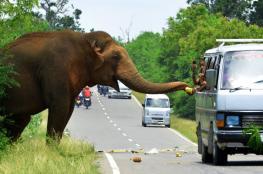 التفجيرات تسقط السياحة السريلانكية إلى الحضيض
