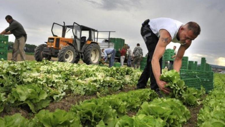 تصدير منتجات زراعية وحجر ورخام بقيمة 8.1 مليون دولار لـعدد من البلدان الشهر الماضي