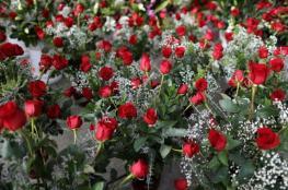 زهور هولندا تُنقذ عيد الحب بألمانيا