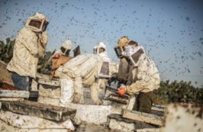 بدء موسم جني العسل الربيعي فى جنوب قطاع غزة