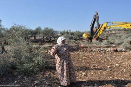 الاحتلال يخطر باقتلاع 70 شجرة زيتون بالأغوار الشمالية