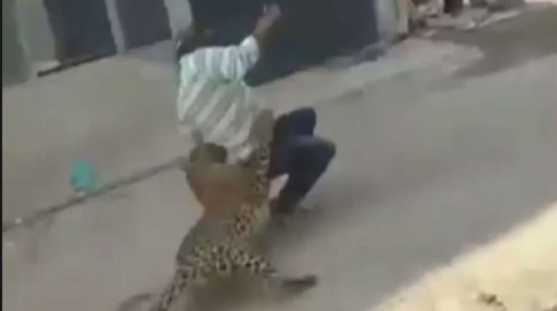 فهد شرس يهاجم سكان بلدة في الهند