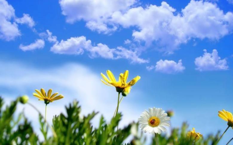 الطقس: استمرار الأجواء اللطيفة والمعتدلة