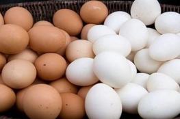 أيهما أفضل: البيض البني أم الأبيض؟