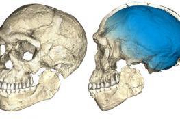 اكتشاف عظام تعيد كتابة التاريخ