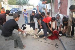 بعد أدائهم صلاة العيد .. الفلسطينيون يحييون مشاعر عيد الأضحى