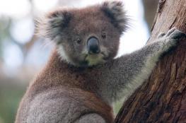 بعد حرائق أستراليا.. كيف نحقق حماية أفضل للحياة البرية؟
