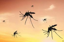 كيف يختار البعوض ضحاياه من البشر؟