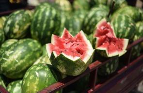 موسم البطيخ في غزة