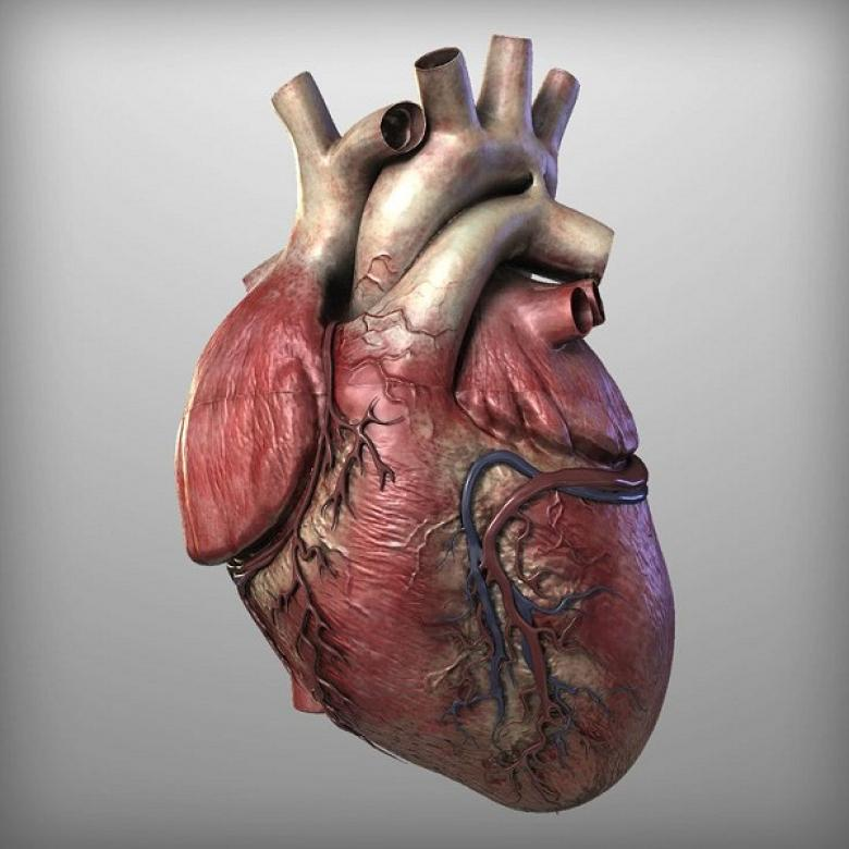 دواء للنقرس يعالج مرضى قصور القلب