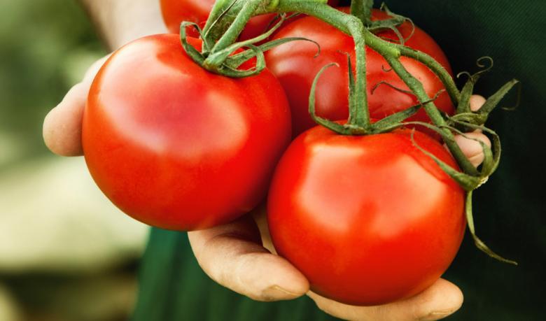 علماء: الطماطم تكافح سرطان المعدة