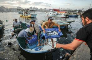 سوق الأسماك داخل ميناء غزة