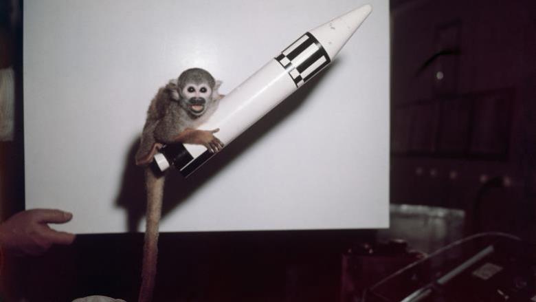تعرف على حيوانات شاركت في مهام فضائية