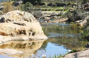 جمال الطبيعة في وادي قانا بالقرب من سلفيت.