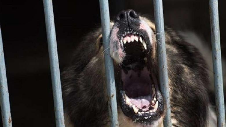 كلبتان بأمريكا تنهشان طفلا في الثانية من عمره حتى الموت