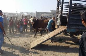 ركود في سوق الأضاحي بغزة بسبب الأوضاع الاقتصادية