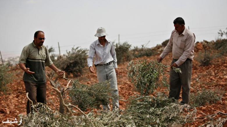 المزارعون في جنين يعتصمون ضد منع الاحتلال دخولهم لأراضيهم