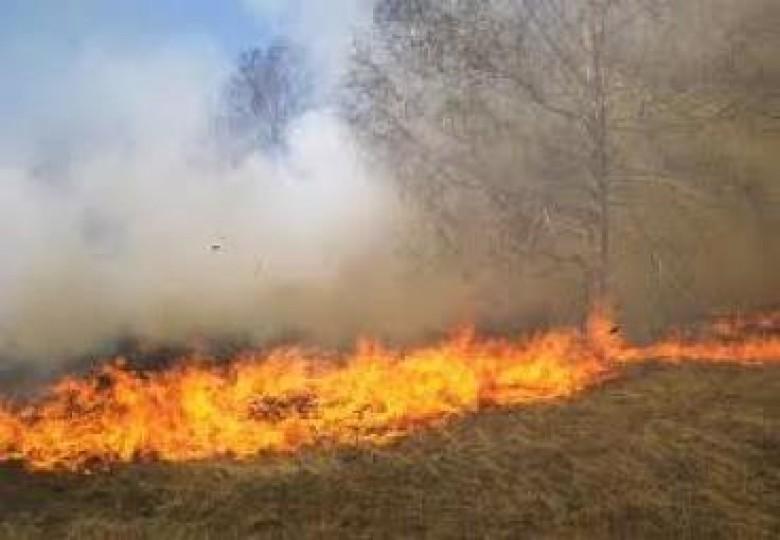 حريق يلتهم أكثر من ألف شجرة زيتون جنوب جنين