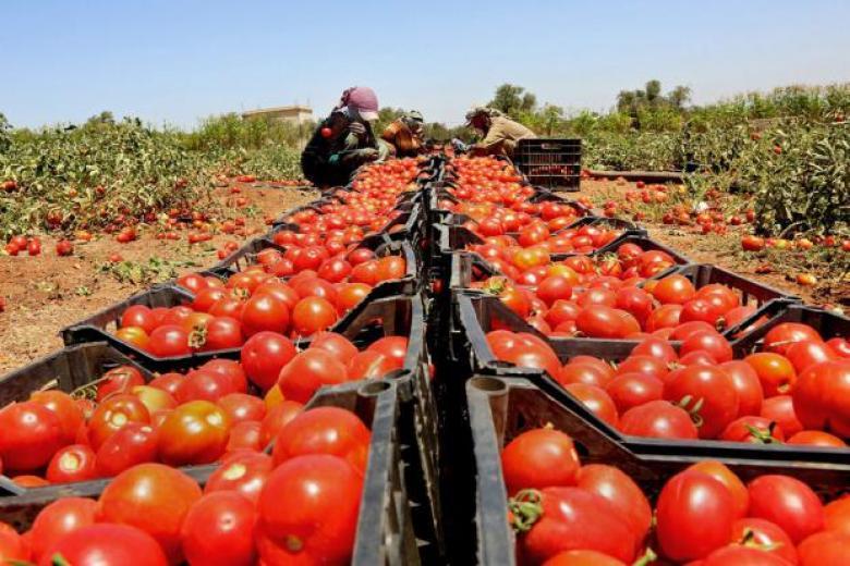 """خلال رمضان.. """"الزراعة"""" تؤكد وفرة المنتجات في السوق المحلي"""