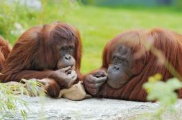 كيف تصوّت الحيوانات لاتخاذ قرارات جماعية؟