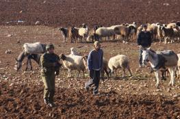 مستوطنون يصيبون راعي أغنام والاحتلال يعتقل آخر بالأغوار