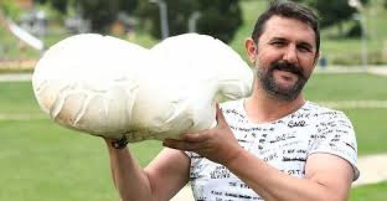 العثور على فطر عملاق بتركيا