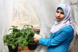 مختبر الأنسجة.. طفرة نوعية في مجال المزروعات المفقودة بغزة