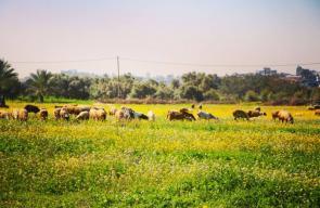 جمال الطبيعة على الحدود الشرقية للقطاع