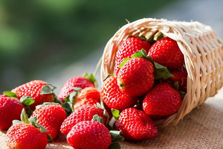 الفراولة..فاكهة حساسة غنية بفوائد جمة