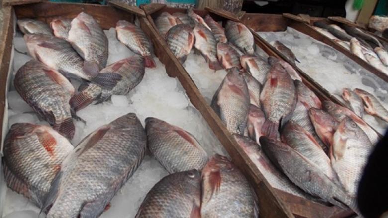 """""""الزراعة والاقتصاد"""" توضحان عملية تسويق الأسماك للخارج"""