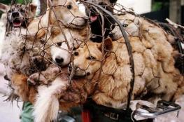 حظر قتل الكلاب والقطط في تايوان