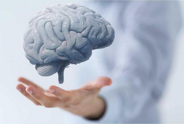 6 أطعمة تحمي عقلك من التلف