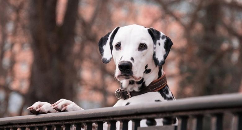 كلب يضحي بحياته لإنقاذ أصحابه