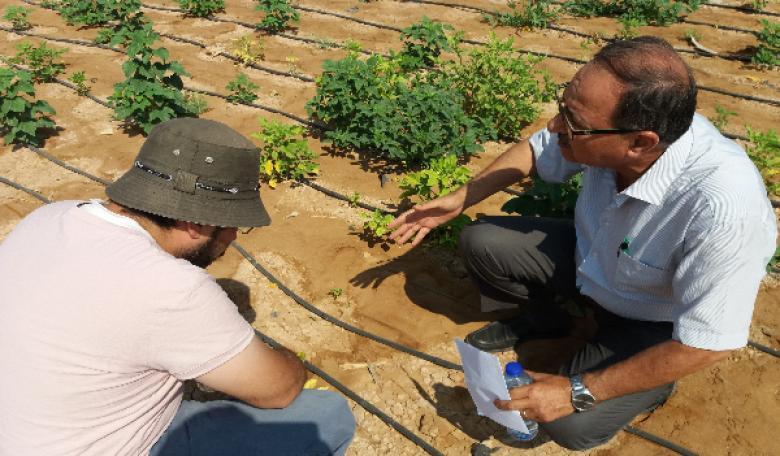 مركز البحوث الزراعية بالقدس المفتوحة يدخل محصولاً علفياً بقولياً جديداً