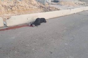 إصابة فتاة برصاص الاحتلال على حاجز قلنديا