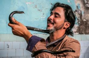 مواطن غزي صديق للصقور والثعابين ويحترف فن التحنيط