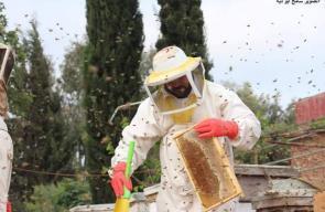 جني العسل في قطاع غزة