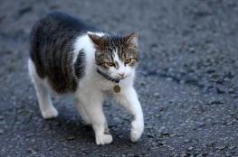"""قطط """"قاتلة"""" في اليابان"""