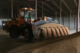 العراق يدرس إدخال القمح الروسي في برنامج الغذاء المدعم