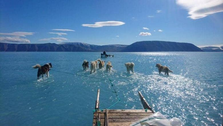 """كلاب تمشي على الماء.. صورة نادرة تنذر بمستقبل """"مرعب"""""""