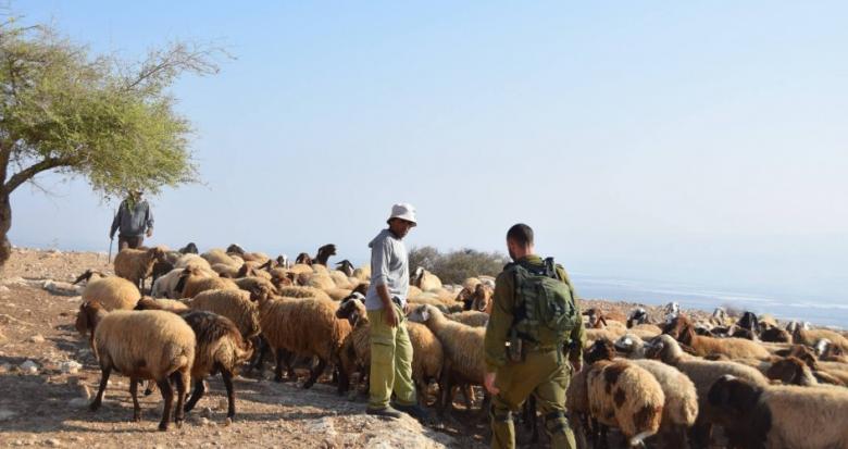 مستوطنون يطردون رعاة أغنام في الأغوار الشمالية