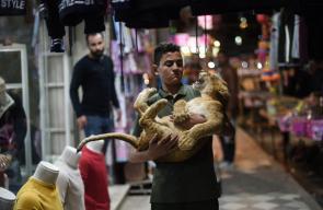أشبال أسود تتجول ويلتقط معها السلفي في شوارع غزة